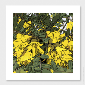 Kowhai's Joy Wall Art Print by Anna Mollekin